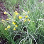 wet clump of thick grass on the right, small yellow flowers on the left