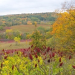 sumac berries in the foreground, a yellow tree at the right, and colorful trees at the top of a hill in the distance